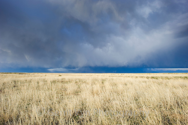 Sandsage steppe and approaching thunderstorm. This is the habitat of the Lesser Prairie-Chicken. Cimarron National Grassland, Kansas. April.