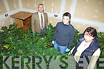CANNABIS: Listowel Gardai? inspecting the cannabis plants worth EUR220,000 which were seized in Causeway last week, l-r: Det Sgt John Heaslip, Garda Aidan Carey, Garda Orla Coakley.
