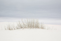 Little Bluestem grasses at White Sands