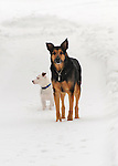 Cosmo and Emma in winter snow.