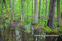 63895-15105 Swamp along Snake Road LaRue Pine Hills Otter Pond Natural Area Shawnee National Forest Union Co. IL