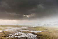 Afternoon rainstorm on the Masai Mara, Kenya, Africa