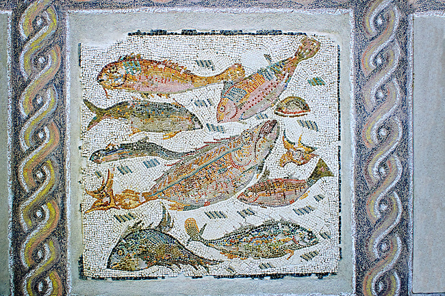 Roman  floor mosaic depicting fish  from  a room of a villa  in the locality Baccano near the Via Cassia, Rome. end of 2nd and beginning of the 3rd century AD. National Roman Museum, Rome, Italy