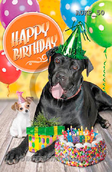 Samantha, ANIMALS, REALISTISCHE TIERE, ANIMALES REALISTICOS, funny, photos+++++Party Great Dane master,AUKP50,#a#