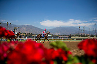 ARCADIA, CA - SEPTEMBER 30: Scenes from Santa Anita Breeders Cup Stakes at Santa Anita Park on September 30, 2017 in Arcadia, California. (Photo by Alex Evers/Eclipse Sportswire/Getty Images)