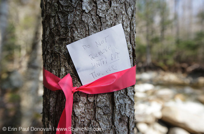 Pemigewasset Wilderness - Flagging placed on tree by a hiker or hikers. Guessing this flagging marks a safe spot to cross the Lincoln Brook just off the Lincoln Brook Trail in the White Mountains, New Hampshire USA.