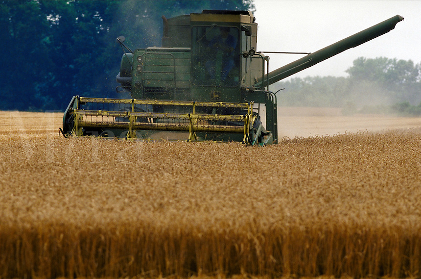 A combine harvests wheat on a southside Virginia farm. Virginia USA Southside.