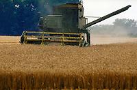 A combine harvests wheat on a southside Virginia farm. Virginia USA Southside.