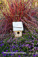 63821-22310 Birdhouse in garden with Lavender Lace Mexican Heather (Cuphea hyssopfolia), Blue Violet Verbena (Verbena tapien) and Fireworks Red Fountain Grass (Pennisetum setaceum 'Fireworks') Marion Co., IL