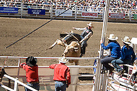 Calgary, Alberta, Canada, July 2008.  A cowboy rides a bull and gets thrown off, to be rescued by the clown. Many professional cowboys who compete in the rodeo circuit, try their luck in the Calgary Stampede. Photo by Frits Meyst/Adventure4ever.com