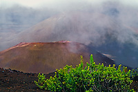 Cinder cones and Kupaoa plant protected by a cover of clouds in the crater of HALEAKALA NATIONAL PARK on Maui in Hawaii
