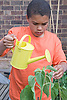 Young boy watering a sunflower plant in his garden at home,