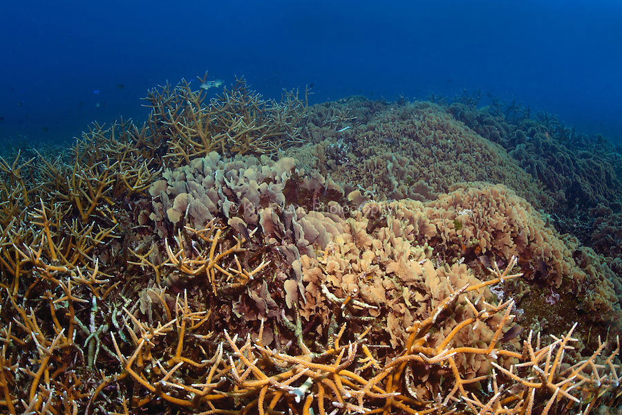 A coral reef at Cordelia Banks at the Swan Islands off the coast of Honduras.