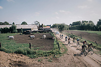 racing the cows<br /> <br /> 92nd Schaal Sels 2017 <br /> 1 Day Race: Merksem > Merksem (188km)