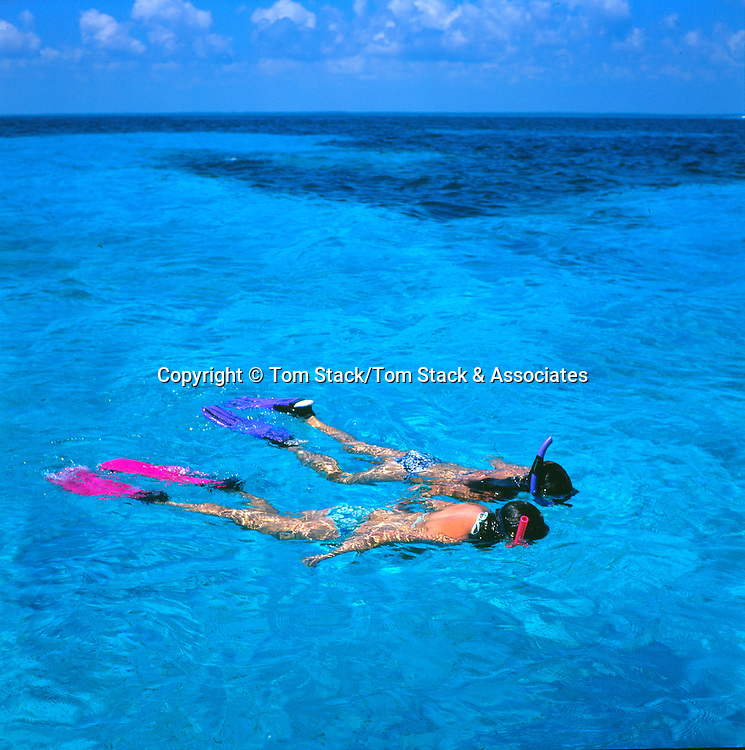 snorkelers in Pennekamp Park, Key Largo, Florida Keys