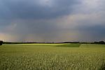 Europa, DEU, Deutschland, Nordrhein Westfalen, NRW, Rheinland, Niederrhein, Krefeld-Traar, Egelsberg, Agrarlandschaft, Feld, Acker, Getreide, Weizen, Anbau, Regenwolke, Kategorien und Themen, Landwirtschaft, Landwirtschaftlich, Agrar, Agrarwirtschaft, Erzeugung, Landwirtschaftliche Produkte, Natur, Naturfoto, Naturfotos, Naturfotografie, Naturphoto, Naturphotographie, Landschaft, Landschaften, Landschaftsfoto, Landschaftsfotografie, Landschaftsphoto, Landschaftsphotographie......[Fuer die Nutzung gelten die jeweils gueltigen Allgemeinen Liefer-und Geschaeftsbedingungen. Nutzung nur gegen Verwendungsmeldung und Nachweis. Download der AGB unter http://www.image-box.com oder werden auf Anfrage zugesendet. Freigabe ist vorher erforderlich. Jede Nutzung des Fotos ist honorarpflichtig gemaess derzeit gueltiger MFM Liste - Kontakt, Uwe Schmid-Fotografie, Duisburg, Tel. (+49).2065.677997, ..archiv@image-box.com, www.image-box.com]