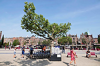 Nederland - Amsterdam - 2018.   Boom op het Museumplein.   Foto Berlinda van Dam / Hollandse Hoogte.