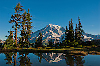 Mountain tarn reflecting Mount Rainier at dawn, Mount Rainier national park, Washington, USA , Plummer's Peak