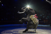 Elephant trained by Rene Caselly performs during the premiere of the new show titled Lights of the Universe in Budapest, Hungary on October 05, 2013. ATTILA VOLGYI