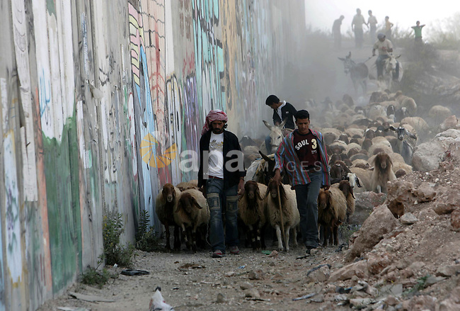 A Palestinian shepherd walks his livestock next to a section of Israel's separation barrier at the Kalandia checkpoint between the West Bank city of Ramallah and Jerusalem, Friday, Oct. 16, 2009. Photo by Mohamar Awad