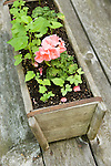 Camp Up-There, Elizabethtown, NY. Old wood planter.