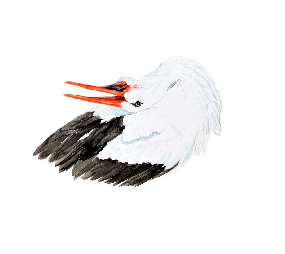Ooievaar (Ciconia ciconia), klepperend