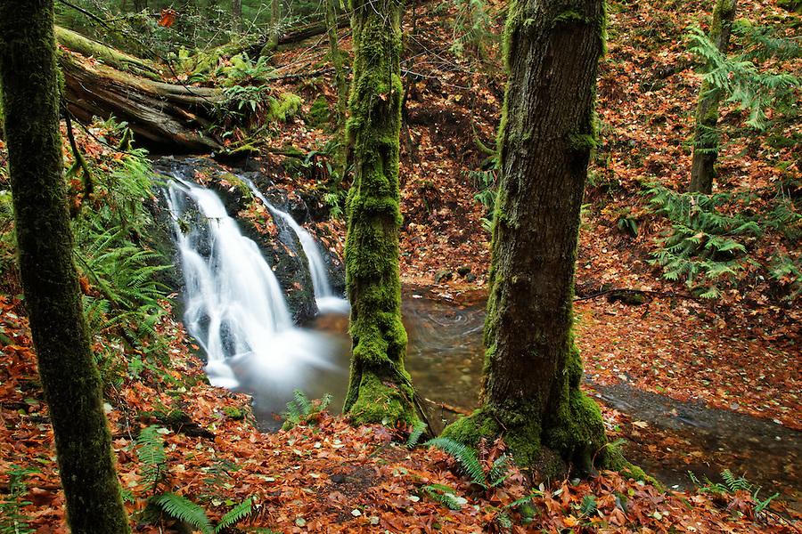 Cascade Creek flowing over Rustic Falls, Moran State Park, Orcas Island, San Juan County, Washington, USA