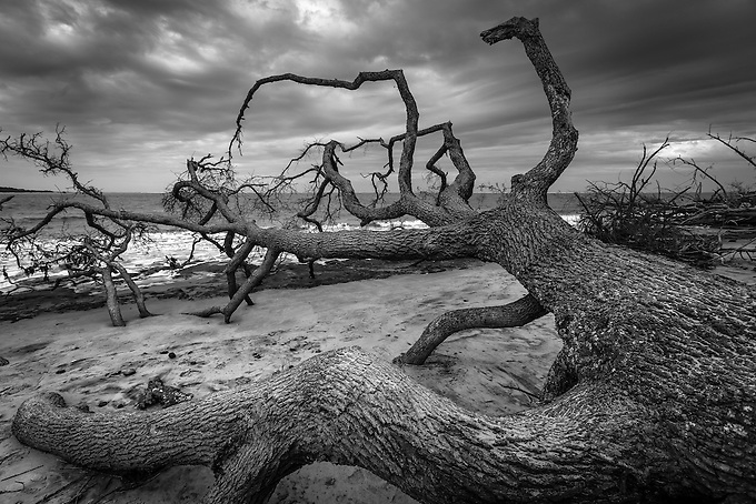 Driftwood on the shore of Florida's barrier islands.