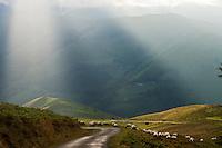 Europe/France/Aquitaine/64/Pyrénées-Atlantiques/Pays-Basque/Soule/ Plateau d'Iraty : sur la route vers Estérençuby