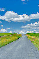 Dirt road through farmland. The Palouse, Washington
