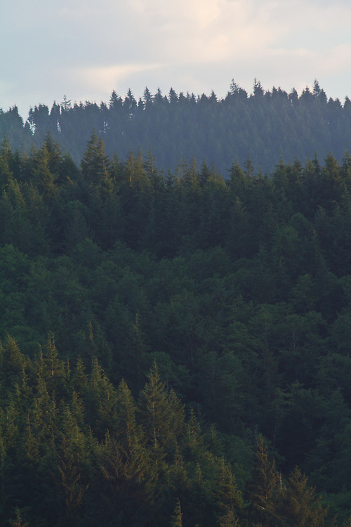 Ellsworth Creek Preserve, forest restoration, The Nature Conservancy, Washington Chapter, Emerald Edge Project, Willapa Bay, Pacific County, Washington Coast, Washington State, Pacific Northwest, United States,