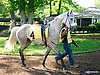 Taylors Touchof Class in the paddock before winning at Delaware Park on 5/30/15