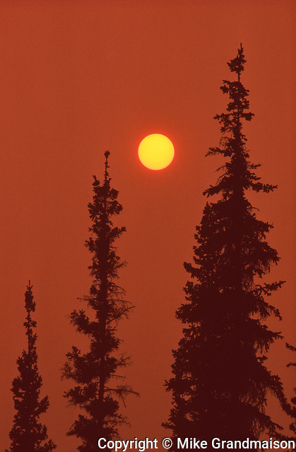 Black spruce trees (Picea mariana) and sun with smoke from forest fire<br /> Nahanni National Park<br /> Northwest Territories<br /> Canada