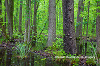63895-15104 Swamp along Snake Road LaRue Pine Hills Otter Pond Natural Area Shawnee National Forest Union Co. IL