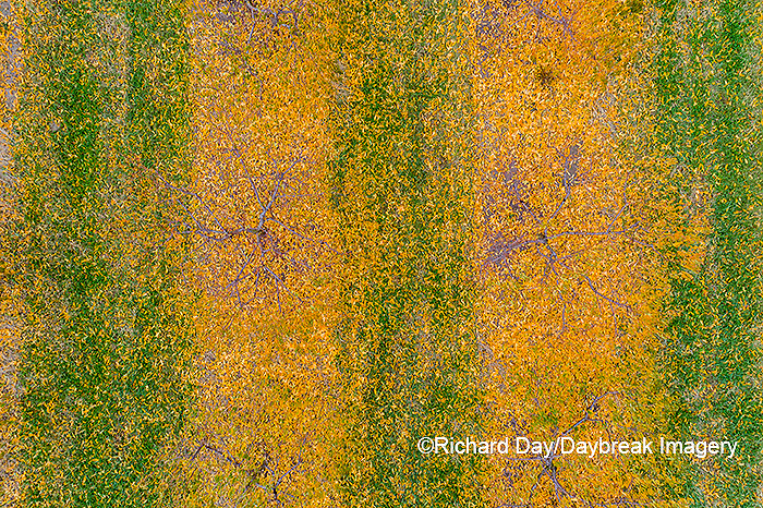 63801-12107 Peach orchard in fall-aerial  Marion Co. IL