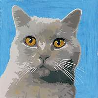 Portrait of British Shorthair cat ExclusiveImage