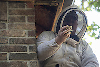 NWA Democrat-Gazette/J.T. WAMPLER Patrick Edwards of Garfield removes honeycomb and bees from a house in Rogers Tuesday Sept. 1, 2015. Edwards, a licensed bee removal expert, has has spent a week removing more than 80,000 bees and several five-gallon buckets of honey and honeycomb from the eve of the house. Bees often split when a hive becomes too crowded, leading bees to sometimes invade homes. September is National Honey Month. For more information on beekeeping go to www.honey.com
