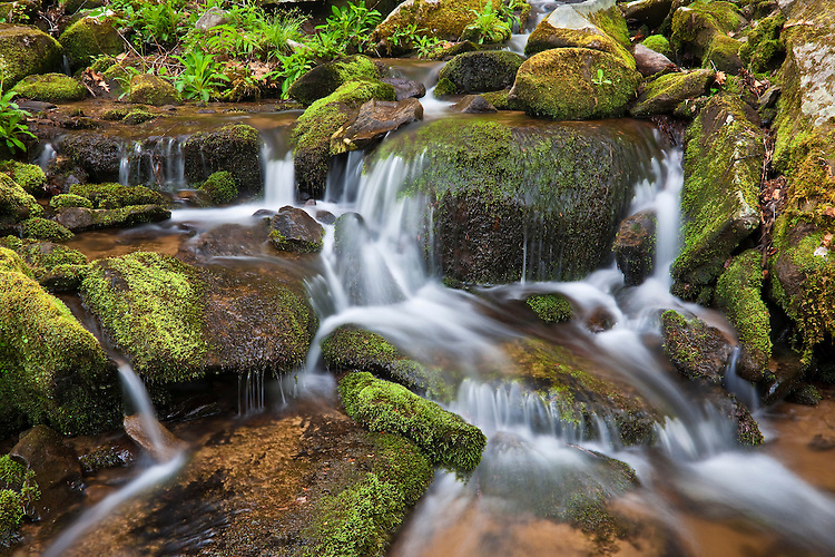 Moss-covered rocks along a tributary of the Little River at Elkmont; Great Smoky Mountains National Park; TN