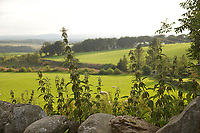 Countryside at Durisdeer, Dumfries and Galloway, Scotland