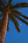 Moon and Palm Trees in evening, Waikiki, Honolulu, Oahu, Hawaii