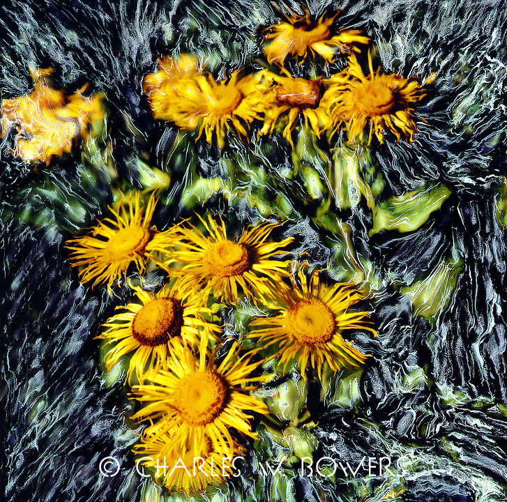 Monet influenced impressionistec painting of a yellow flowering daisey-like beauty.<br />