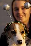 Jack Russell Terrier wearing alien antennas with girl in background Marysville Washington State USA.