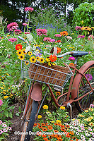63821-22209 Old bicycle with flower basket in garden with zinnias,  Marion Co., IL