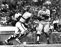 Oakland A's catcher Gene Tenace tags out Minnesota Twins runner.. 1972 (photo/Ron Riesterer)