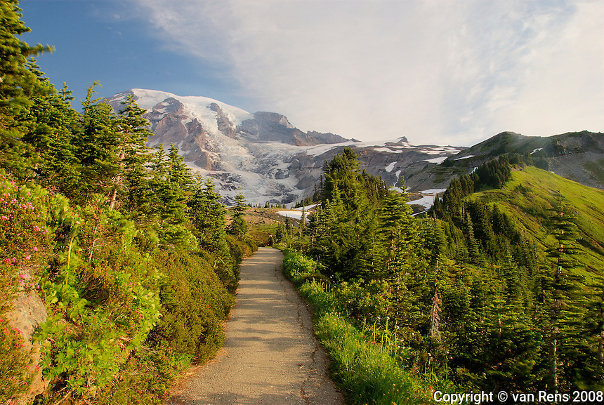 Mounting Walk Trail om Mt. Rainer  shows eco diversity with wildflowers and tundra climate.
