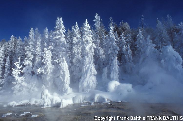 Ghost trees in Upper Geyser Basin
