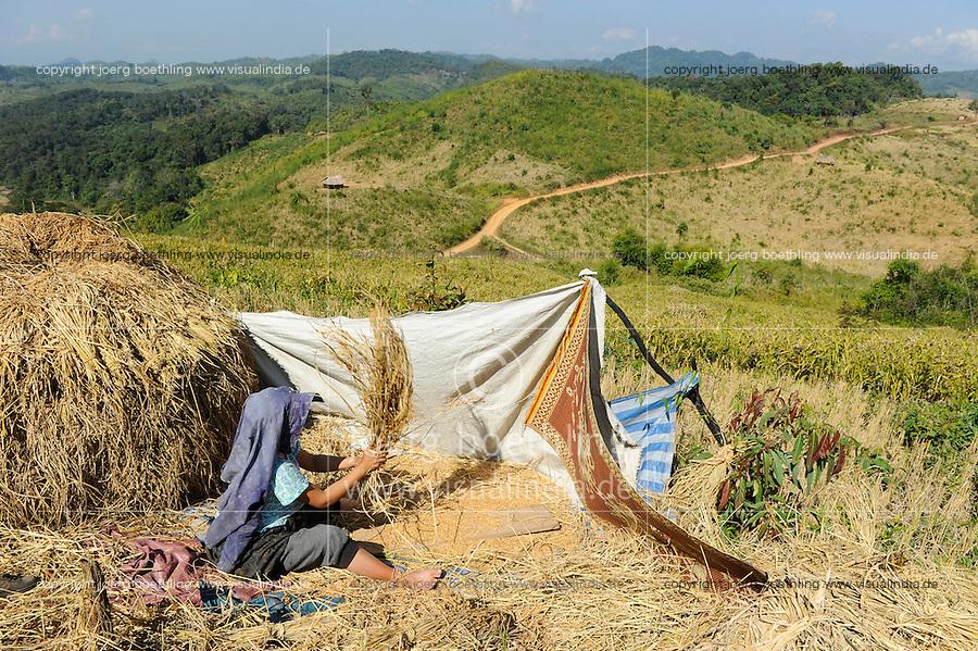 Asien LAOS Provinz Oudomxay , Ethnie Khmu , auf den Bergen wird Brandrodung fuer Subsistenzlandwirtschaft betrieben, Anbau von Hochland Reissorten , die Ertraege sind sehr gering 1-2 Tonnen pro Hektar , Frau Dao aus Dorf Laksaosong beim Dreschen | .Asia LAOS province Oudomxay , village Laksaosong, ethnic group Khmu, rice farming in mountains, woman trash rice manually