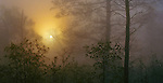 Buffalo National River, AR<br /> Morning sun burning through foggy hardwood forest