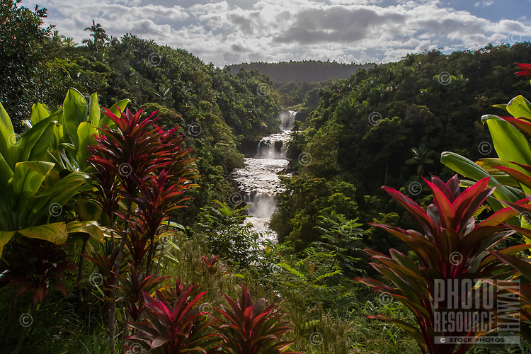 A Hidden Beauty: Ti leaves frame a gorgeous view of Umauma Falls with an incredible amount of water flowing down its series of waterfalls a few days after back-to-back hurricane systems passed over Hilo, Big Island.