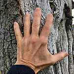 """Day 10: self isolation/covid 19/2020. """"Hey yoga teacher!"""", I heard someone shouting from across the street. Out on my daily walk, avoiding people, from across the street I saw one of my yoga students waving hello to me. We connected through the space between us, he smiling and telling me how much he missed my classes but he's also exercising everyday. Me, so happy to see one of my students, my hands together at my heart I bowed to our yoga practice and a hope for our future."""